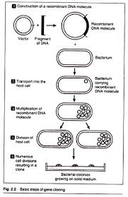 7 Main Steps Involved In Gene Cloning