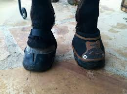 Fitting The Easyboot Glove Back Country Easycare Hoof Boot