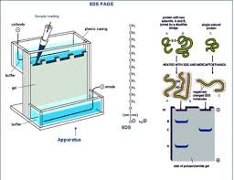 gel filtration chromatography an