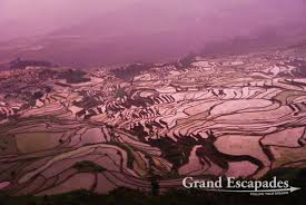 the rice terraces of yuanyang grand escapades rice terrasses of yuanyang here in duoyishu yunnan