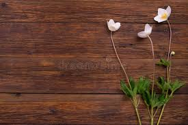 table top view. Download White Flowers On Wooden Table. Top View, Copy Space. Stock Image - Table View H