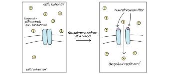 Neurotransmitter Chart Neurotransmitters And Receptors Article Khan Academy