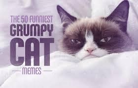 The 50 Funniest Grumpy Cat Memes | Complex via Relatably.com
