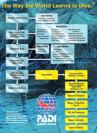 Padi Scuba Diving Training Courses Your Questions Answered