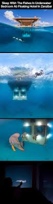 Shark Decorations For Bedroom 17 Best Ideas About Underwater Bedroom On Pinterest Ocean Themed