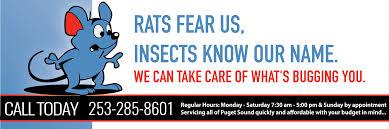 pest control tacoma wa.  Tacoma Tacoma Puyallup Commercial  Residential Pest Control And Exterminator  Service On Tacoma Wa C