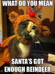 cute animals quotes. Unique Cute 30 Funny Animal Christmas Quotes Funny Quotes Animals In Cute Animals D
