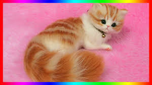 cute fluffy kittens. Perfect Kittens And Cute Fluffy Kittens