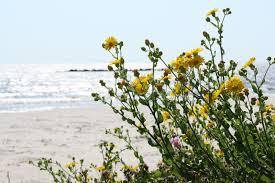 Visit Lake Charles La Seashells By The Seashore