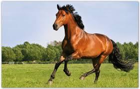 Horseswebinar Gezond Gras Voor Uw Paard Dressuur Magazine