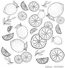 レモン 手描きの線画のイラスト素材 40353920 Pixta