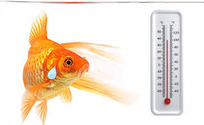 How Long Can You Survive In Cold Water Chart Water Temperature In Your Aquarium Its Pretty Darn Important