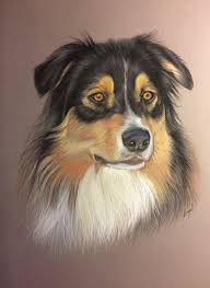 Portrait Au Pastel De Berger Australien D Apr S Photo Les