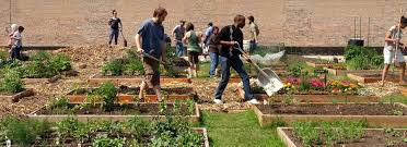Kitchen Gardeners International About Page