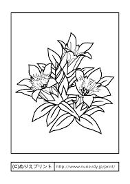 リンドウ主線黒秋の花無料塗り絵イラストぬりえプリント