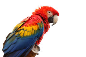 1860s problems ADOXOBLOG scarlet macaw