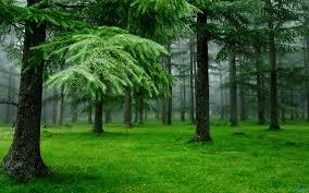 Nature Green Wallpaper #7013449