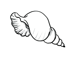 Small Picture Seashell Coloring Pages Preschool Sea Shell Page 2 vonsurroquen