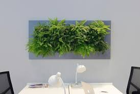 green wall office. LivePicture Is A Piece Of Living Artwork That Bridges The Gap Between Plants And Art Green Wall Office