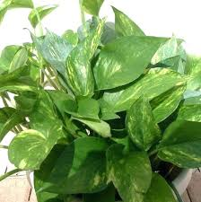 house plants pictures and names house plants pictures and names common indoor house plants marvelous common house plants pictures and names
