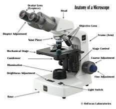 Parts Of The Microscope Parts Of A Compound Microscope With Diagram And Functions