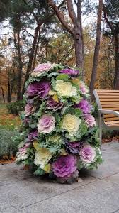 autumn garden flower tower using flowering cabbages plant cabbage flowering