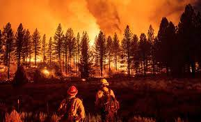 The Oregon Bootleg Fire bodes ill for ...