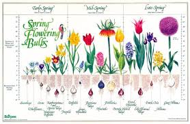 Bulb Chart Bloom Time And Planting Depth For Spring