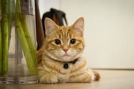 hyperthyroidism in cats symptoms