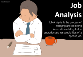 Him Chart Analyst Job Description Job Analysis Definition Importance Components Methods