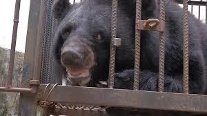 How a <b>Family</b> in China Mistook an Asiatic Black <b>Bear</b> for a <b>Dog</b>