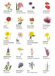 Flower Chart Know What Your Wedding Flowers Mean List Of