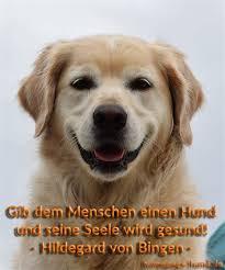 Lustige Hunde Bilder Mit Sprüchen Kostenlos Downloaden Brahpaparsou