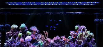 connect and customize your orbit marine ic led lights