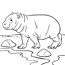 Hippopotamus Coloring Pages Avusturyavizesiinfo