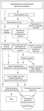 Pathways To Nephron Loss Starting From Glomerular Diseases