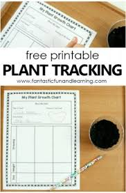 Plant Tracking Sheet For Kids Fantastic Fun Learning