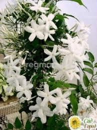 Цветы в горшках комнатные <b>растения</b> в Подольске 🥇
