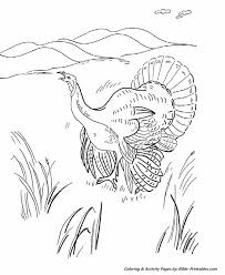 wild turkey coloring pages. Simple Pages Thanksgiving Scenes And Fun Coloring Pages Throughout Wild Turkey Y