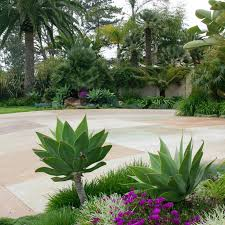 Small Picture 42 best Drought Resistant Landscaping images on Pinterest