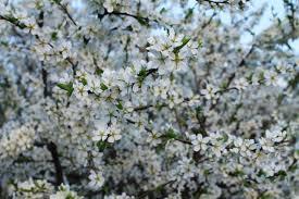spring nature backgrounds. Spring Nature Backgrounds