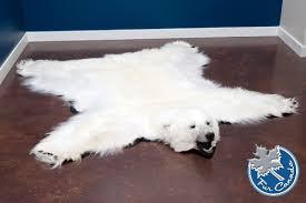 polar bear skin rugs