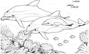 Small Picture Dolphin Coloring Pages for Adults Dolphin Coloring Pages For