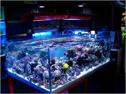 aquarium light bulbs led aquarium lighting how aquarium lighting affects guppies