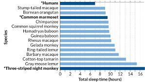 Compared To Other Primates Humans Get Little Sleep