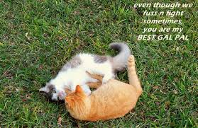 Quotes About Pets And Friendship Best Friendship Cats For Women Free Between Women ECards Greeting Cards