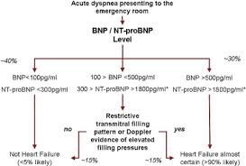 Bnp Levels Chart B Type Natriuretic Peptides And Echocardiographic Measures