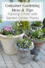 3 container gardening ideas tips an