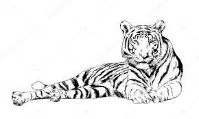 Tetování Tygr Na Ruku
