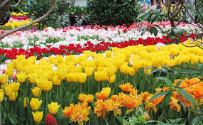 "Image result for flowers of all colors flowers ""flowers"""